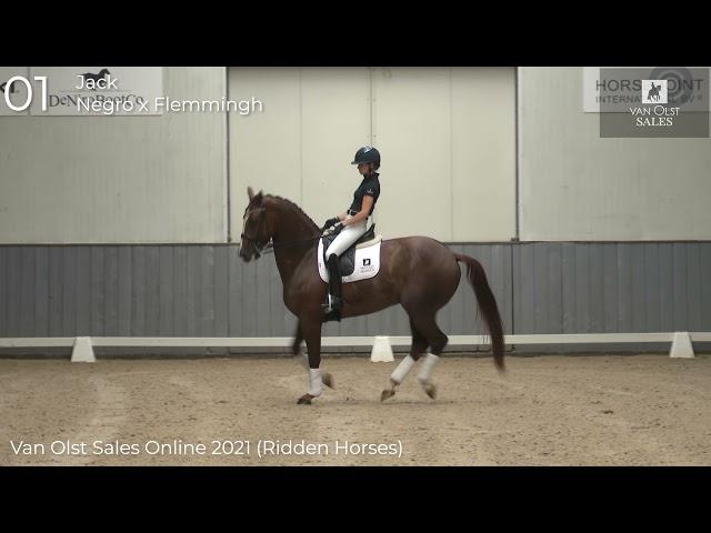 Jack under saddle