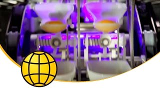 Multiple Solutions In The Egg Industry