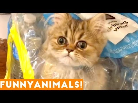 Funniest Pets of the Week Compilation January 2017 | Funny Pet Videos