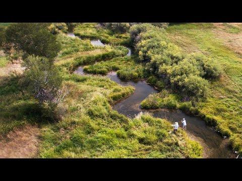 Montana Fly Fishing - Spring Creek