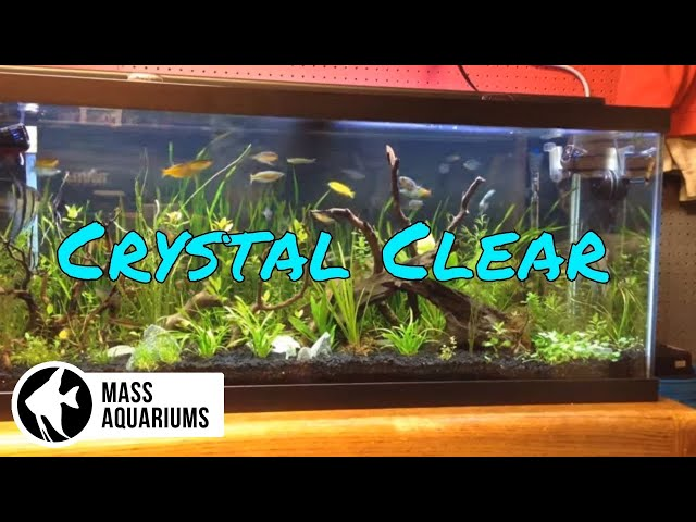 How to keep crystal clear water in your aquarium