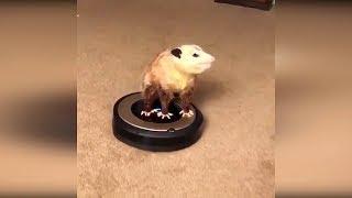 Видео приколы с животными 2019 #14 Смешные приколы с котами, смешные животные февраль, приколы 2019