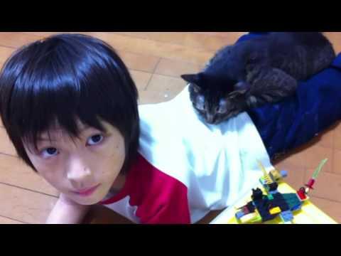 息子の命を救おうとした猫