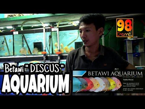 """Betawi """" DISCUS"""" Aquarium - Discusnya Emang TOP"""