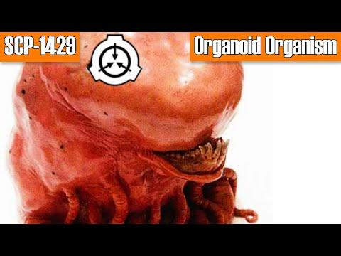 Parasite development cycle ng host organismo