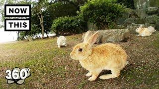 Rabbit Island - Okunoshima, Japan | Unframed by Gear 360 | NowThis