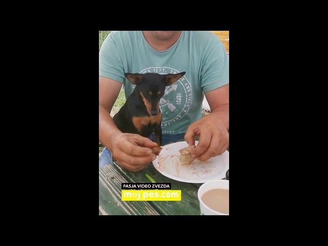 Grom – Video natečaj 2020 – Revija Moj Pes #Grom #MojPes