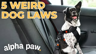 5 Weird Dog Laws You Won't Believe