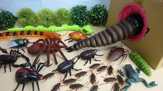 Various Monster Insects and Bugs step into Big Takilong's Box in a row