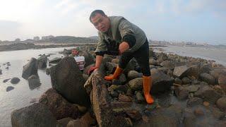 【兄弟趕海】大熊兄弟海邊趕海,石頭搬起來底下藏著大貨,這是抓過最大的一只