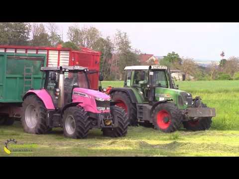 Pink Lady  -MF 7618 beim 1.Schnitt ||Claas Jaguar 980||