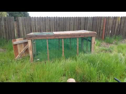 Chicken Tractor Experiment