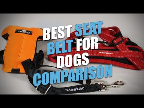 Best Seat Belt For Dogs Comparison (2018)