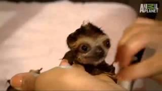 Baby Sloth Bath Cute Squeak