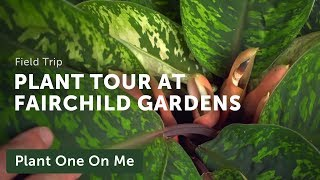 Meditative Botanical Tour At Fairchild Tropical Botanic Garden — Ep 182