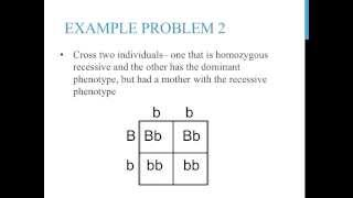 Punnett Square Practice Problems (simple)