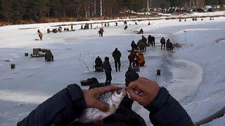 Отчеты рыбалка на рыбинском водохранилище