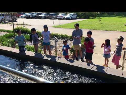 Kids Feeding the Fish around the Restaurant #happydays