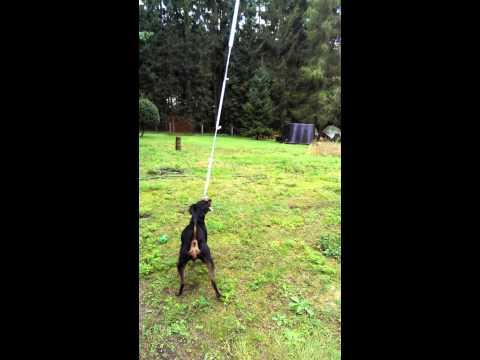 Spielzeug für Hunde, DIY, Hund Spielt mit Ball