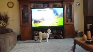 Baxter sees a dog on TV