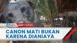 Terungkap Penyebab Kematian Anjing Bernama Canon di Aceh Singkil, Bukan karena Dianiaya Satpol PP