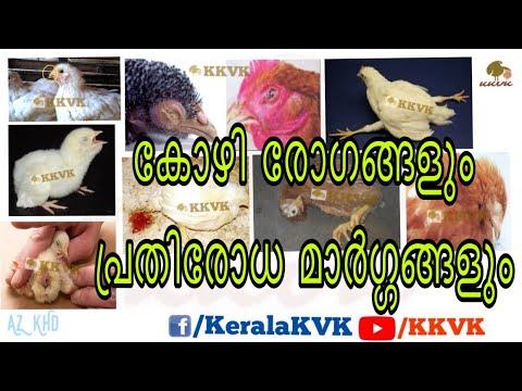 , title : 'കോഴികളിലെ രോഗങ്ങളും പ്രധിരോധ മാർഗ്ഗങ്ങളും Cause & Prevention of Poultry Diseases