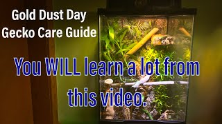 YOU MUST WATCH THIS BEFORE Owning a Day Gecko!!!