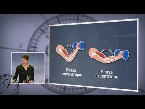 Les organismes de la respiration des parasites