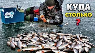 Зимняя рыбалка плотва в подмосковье