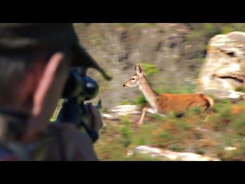 Hunting driven deer