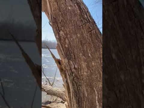 Video Of Weston Bend, MO