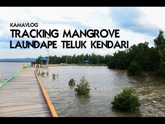 KamaVlog : Menikmati Mangrove Lahundape di Teluk Kendari