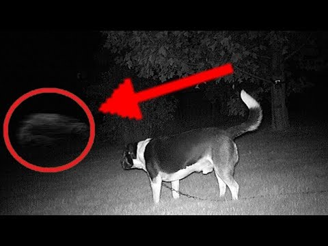 5 Dogs That Saw Something Their Owners Couldn't See : ESP and the Supernatural