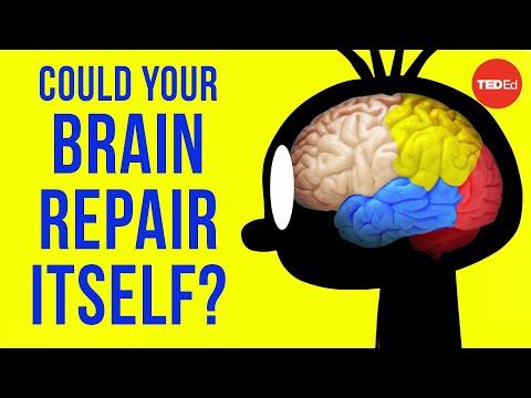 האם המוח יכול לשחזר את תאיו?