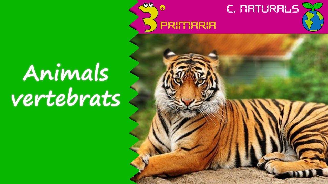 Ciències de la Naturalesa. 3r Primària. Tema 5. Animals vertebrats