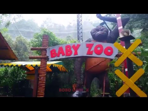 THE BABY ZOO - Taman Safari Indonesia [FULL HD]