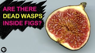 Are There Dead Wasps In Figs?   Gross Science