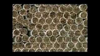Как производят сигареты в россии