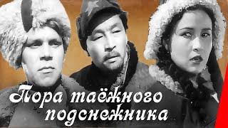 Пора таежного подснежника (1958) фильм