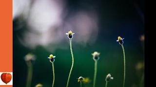 The Flower Garden 05-Purchasing of Seeds by Ida Dandridge Bennett (audiobook)