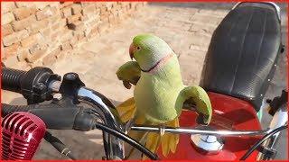попугайчики #10 лучшие моменты