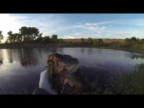 Senko & Keitech Largemouth Bass at Local Norcal Pond – 6.20.2014