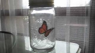 Butterfly in a Jar  *SPOILER ALERT*