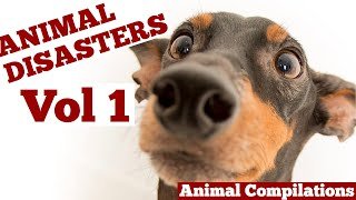 ANIMAL DISASTERS: VOL 1