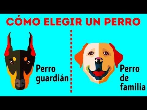 Cómo Elegir La Raza De Perros Perfecta Para Ti