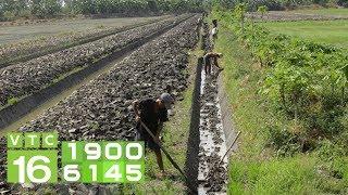 Kinh Nghiệm Cải Tạo đất Lúa Trồng Cây ăn Quả I VTC16