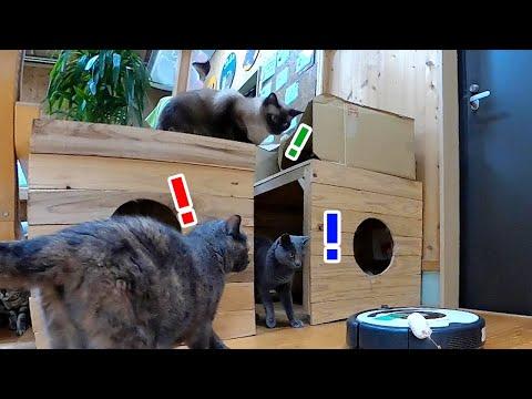 猫たちのたまり場にお掃除ロボットを解き放った結果www