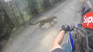 Almost Hit A Mountain Lion In Eastern Oregon
