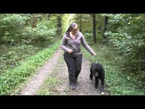 Gürtel für Rückenschmerzen im unteren Rücken der Wolle