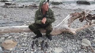 Рыбалка на горбыля в черном море и снасти